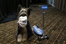 BarkWorld 2012 / by Natural Balance Pet Foods