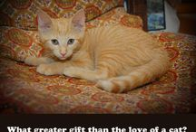 Famous Cat Quotes / by Paris Permenter