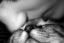 All Things Feline / I love cats / by Colette Chapman