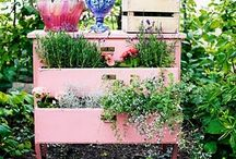outside/garden / by Tonja Carter