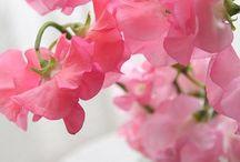 Flowers / by LeAnn Fillmore