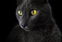 Chat Noir / by Trine Paulsen