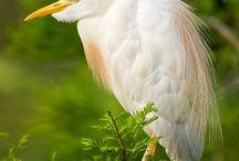 Birds, Fowl, Fish and Butterflies   / Photos of birds, fowl, fish and butterflies / by Anne Monteleone