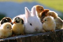 Easter ~ Spring / by Susan Bambino
