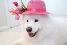 Easter Hat Gallery / by Angela Hill