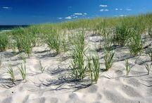 Beach Bum / by Kim Williams