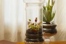 plants / by Wilhelmina Yerger