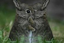 Adorable Animals / by Haley Walker