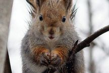My LOVE for animals!  / by Brenda Howard-Valdez