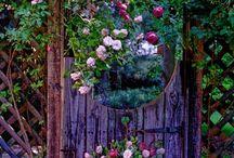 Floral / by Dora Ficher Art