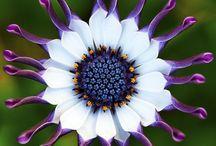 Flowers / by Pattie Manning