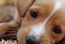 Puppies  / by Lynne Jones