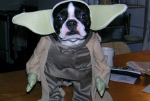 That Poor Dog / Funny pictures of dogs dressed up. / by Christine Frawley Hill