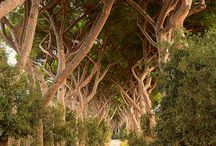 FASCINATING ROADS AND PATHWAYS / by Gail Chesham