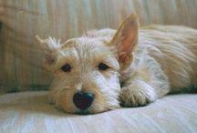 Frisky Furry Friends / by Linda Vaughn