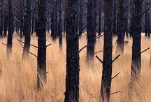 Landscape / Nature / by Francois Aubret