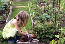 veggie garden / by Amanda Cooper