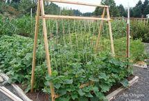 Gardening / by Julie Doo