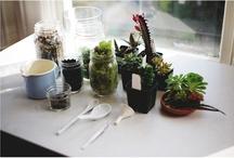 House Plants / by Paula Brown