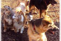 My pet family! / by Heather Gutknecht