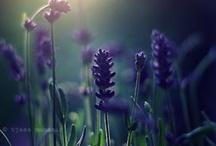 Garden Ideas / by Mary Costello