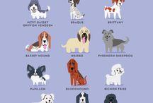 Doggie..French / by R J Ditt