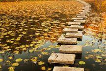 Autumn / by Susie Mann-Paro