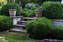 Gardens / by Silvana Atkinson