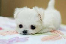 Love Fluff-a-pup-kisses / by Sarah Foltz