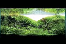 Aquarium garden / Plant Aquarium / by Tony Di Bona