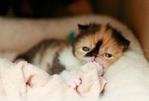 Cats / by Jonha Revesencio