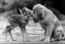 puppy love / by Karen Dees