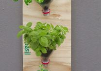 Indoor Garden/ Hydroponics / by Tammy Koehler