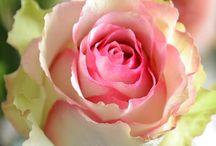 flowers / door Cindy Hiteshew