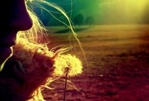 you are my sunshine... / by Cori