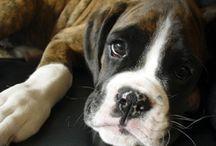 pups :) / by hope edlebeck