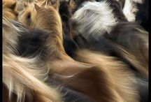 Beauty In Motion / by Sherry McKinsey