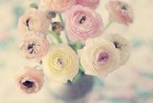 flowers / by Kerrie Kampen