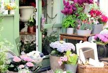 Floral decor / by Seven Sisters Florist