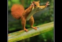 Funny Pics / by Cristina Lombardo