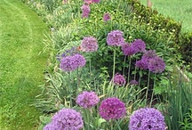 Front yard landscaping / by Kim Allen