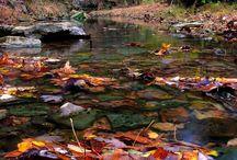 Fall Has Fallen / by Clara Phillips