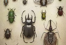 Insect Bug & Co - Insekten (MM) / by M M