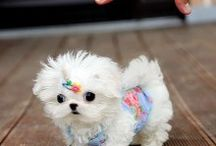 Dogs / by Lucy's Luxuries