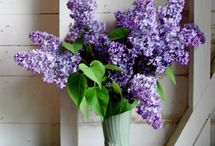 Lilac flowers / by Margo Bangert
