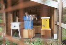 BEEkeeping / I want to be a beekeeper... / by Jenny | Sheepy Hollow