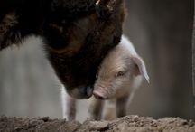 Friends / by Animals Voice