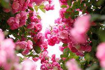 GARDEN / Garden Inspiration  / by JEWELS BALLER