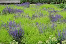 planning garden / by Diana Glennie