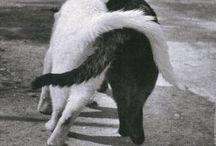 *animals* / by Caroline Pretorius